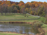 Fall Scenic of Horse Farm and Pond with Canada Geese