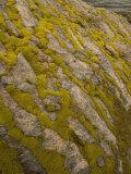 Green Moss-Covered Rocks Alongside the Merced River