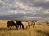 Three Horses Grazing in Grand River National Grasslands  South Dakota