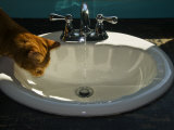 Orange Tabby Cat Watching Water Flow into a Bathroom Sink