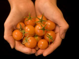 Close-up of Hands Holding Cherry Tomatoes