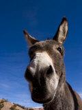 Portrait of a Burro in New Mexico