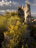 Rabbitbrush Grows Alongside Tufa Towers in the Mono Lake Scenic Area