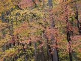 Colorful Fall Foliage Along the C&O Canal Towpath