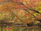 Young Woman Kayaks Down the C&O Canal in Fall