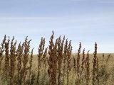 Close Up of Prairie Grass