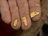 Close-up of a Miner's Hand Holding Gold Nuggets Found in South Dakota