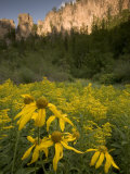 Yellow Wildflowers Growing in Spearfish Canyon  South Dakota