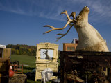 Mounted Caribou Head Reflects in a Mirror at an Outdoor Flea Market