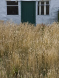 Tall Grasses Growing Up to the Door and Windows of a Building