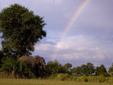 Rainbow Leads to an African Elephant Among the Trees