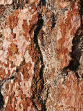Close View of Tree Bark