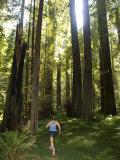 Woman Runs on a Trail Through a Coastal Redwood Forest