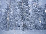 Falling Snowflakes Near Asahi Dake Spa