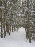Ski Trail on a Winter Day
