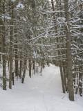 Ski Trail on a Winter Day