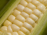 Close View of Corn