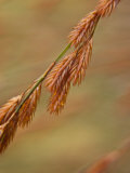 Close View of a Plant Resembling Wheat in a Botanical Garden