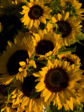 Bunch of Sunflowers are on Display at a Local Farmer's Market