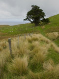 View of Scenic Trees and Tussock Grasses on the Otago Peninsula