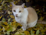 Tabby Cat on Autumn Leaves