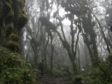 African Porter in the Rainforest of Mount Kilimanjaro