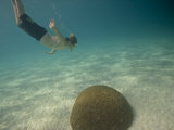 Snorkeler Dives Toward Coral