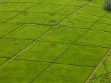 Aerial of Lush Green Tea Fields in Kenya