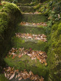 Moss and Leaf-Covered Steps in a Formal Garden at Natadera Temple