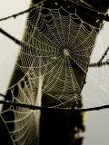 Spiderweb on a Branch