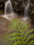 Fern Growing Beside Small Waterfalls in the Forest
