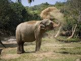 Elephant Takes a Dust Bath on the Edge of a River