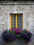 Flowers Bloom in a Window Box