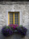 Flowers Bloom in a Window Box