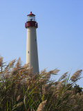 Cape May Lighthouse and Reeds Bending in a Gentle Breeze