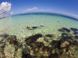 Man Snorkeing Near Reef in Turquoise Waters Off of a Bahamas Beach