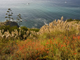 Flowers Overlook the Pacific Ocean in Big Sur  California