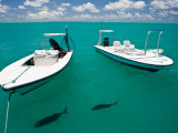 Two Tropical Fish Swimming Just under the Water Near Anchored Boats