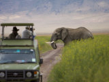 African Elephant Crosses the Road Behind a Safari Jeep
