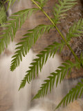 Close-up of Fern Growing Beside a Small Waterfall in the Forest