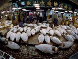 Tuna Caught in the Indian Ocean Await Buyers at Tsukiji Fish Market