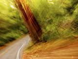 Blurred Motion Shot of a Road Running Through a Giant Redwood Forest