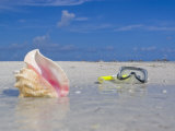 Queen Conch Shell and Snorkel Mask on a Sandbar in the Florida Keys