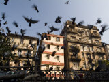 Pigeons Fly at Kothari Kaboota Khanna Near the Victoria Terminus