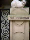 "White Cat Sits on a ""No Parking"" Sign"