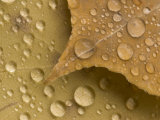 Magnification of Rain Drops on Leaves in Black Hills National Forest