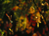 Leaves in a Fantastic Array of Autumn Colors