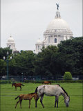 Ponies Graze in Front of Calcutta Landmark  Victoria Memorial