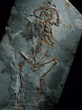 This 124 Million Year Old Frog Fossil Comes from Sihetun  China