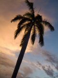 Palm Tree Silhouette at Twilight